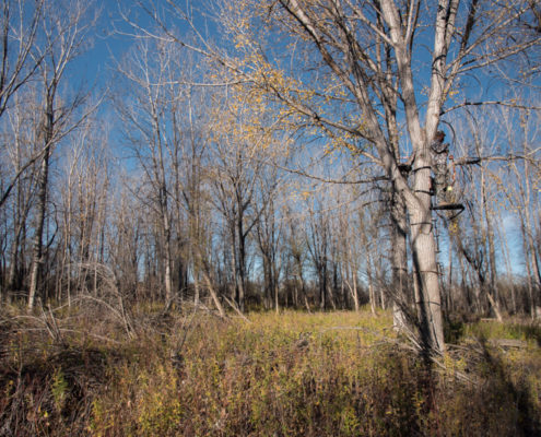 treestand, hunting, elk, montana, sitka gear, elevated II, the outlier film